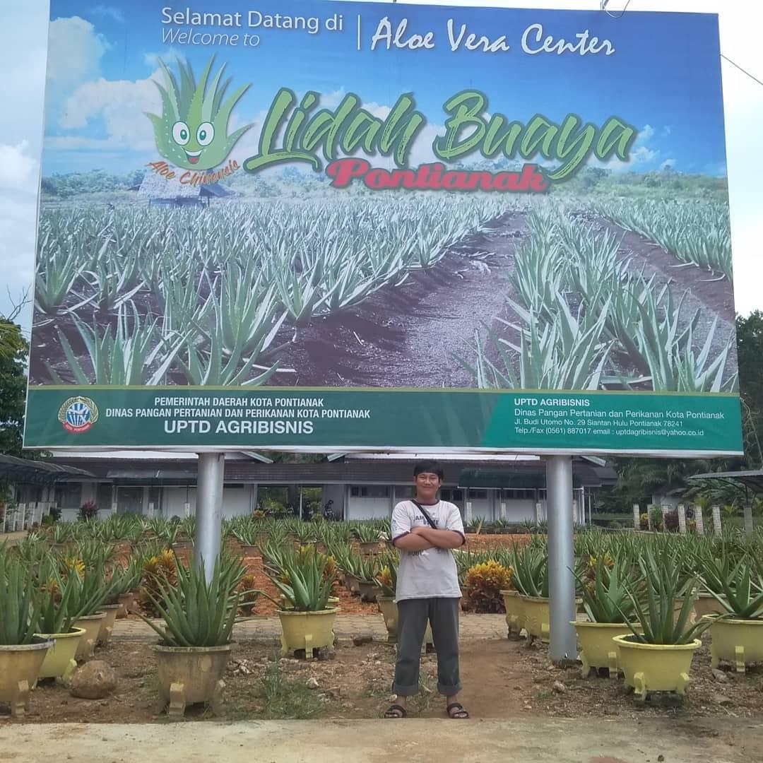 Aloe Vera Center Lidah Buaya Pontianak
