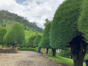 Bukit Jamur Ciwidey