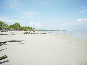 Tanjung Medang Pulau Rupat Provinsi Riau