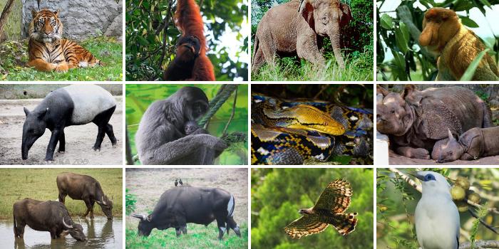 Persebaran Fauna Indonesia Bagian Barat