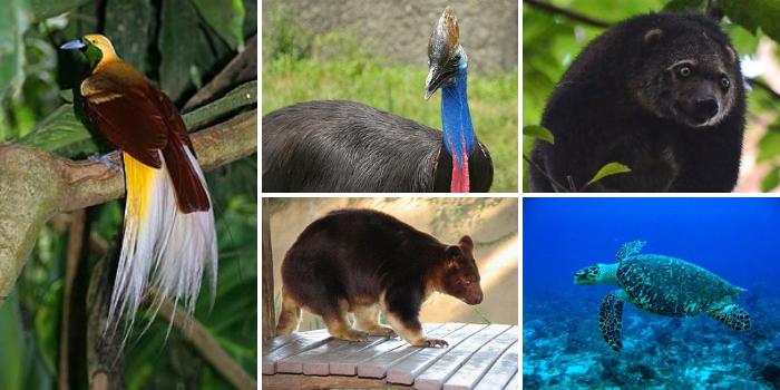 Persebaran Fauna Indonesia Bagian Timur